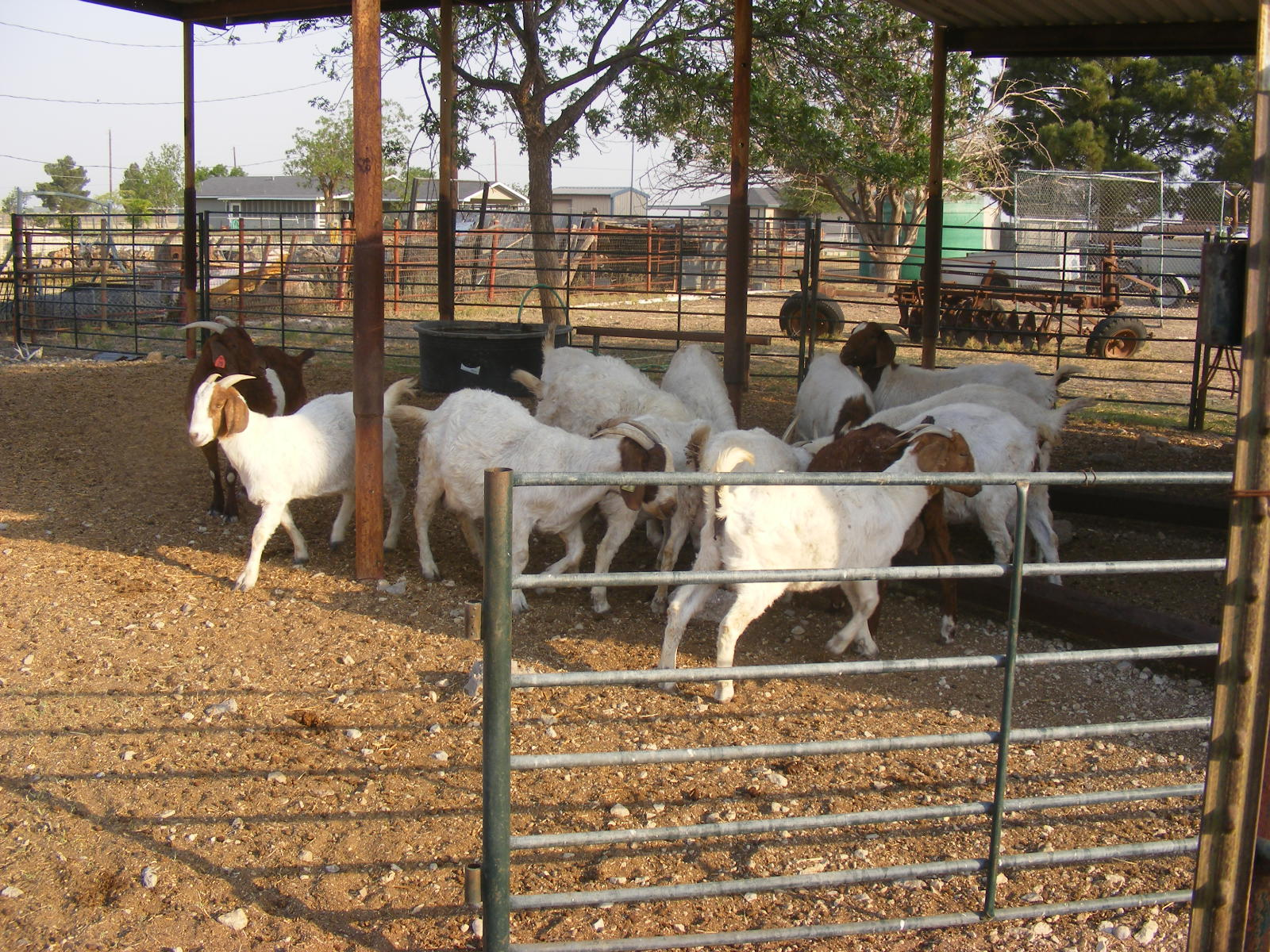 Camp Follower Bags And Quilts The Goat Farm