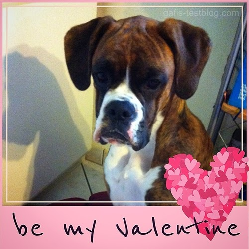 Boxer Amy - be my Valentine