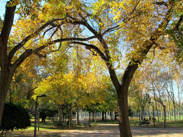 Jardín Viejo Cauce Río Turia, diciembre 2013 - Paseos Fotográficos TK