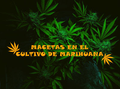 Diferentes macetas en el cultivo de marihuana