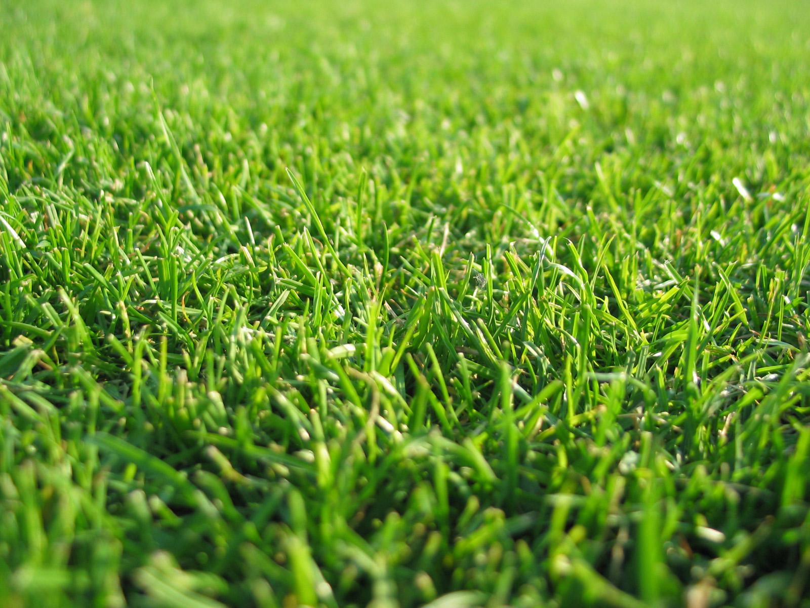 Maritza Craig: grass