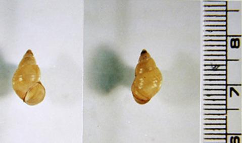 Liver Flukes Part 1: Clonorchis sinensis - Infection Landscapes