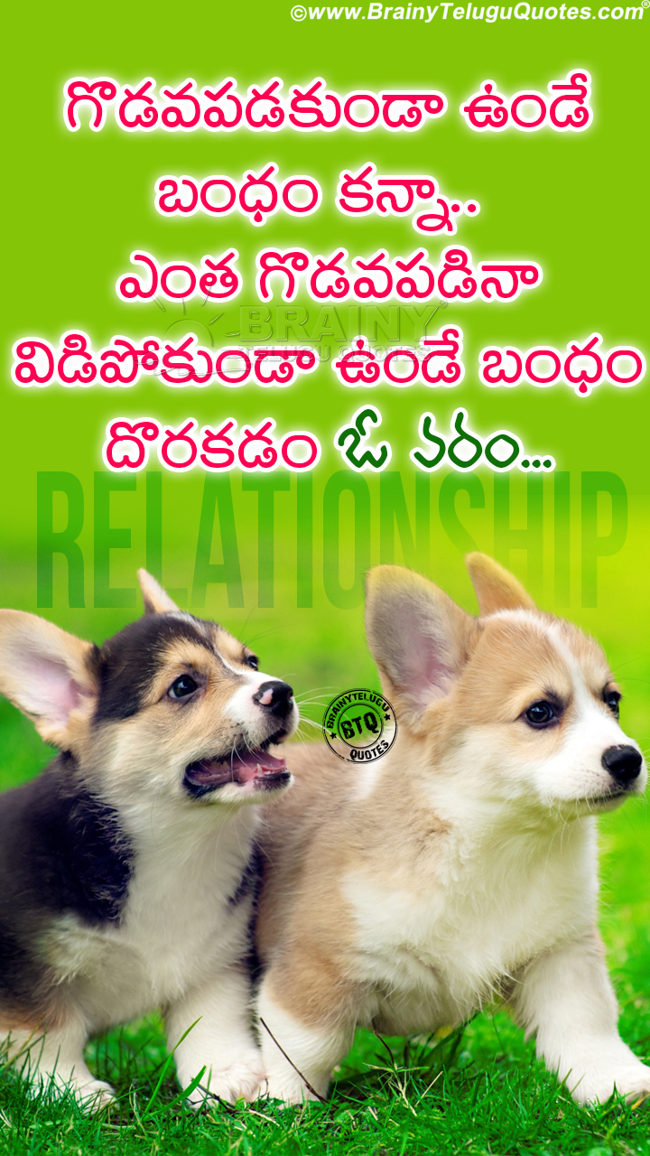 Trending Telugu Whats App Status Relationship Quotes with Cute Puppy Hd Wallpapers ...