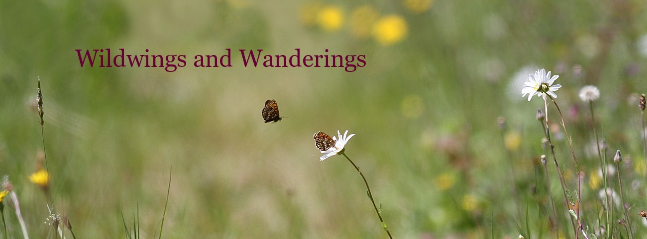 Wild wings and wanderings