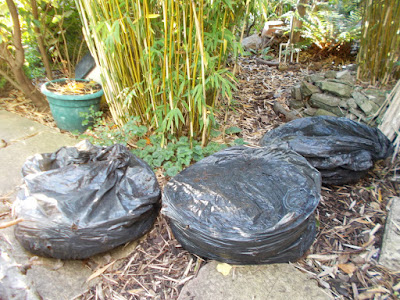 Bags of one year old leaf mould How to make leaf mould The Green Fingered Blog