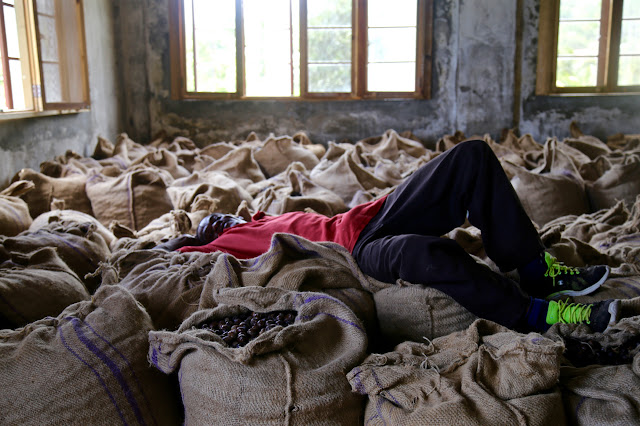 worker resting on sacks of nutmeg at the nutmeg factory, grenada