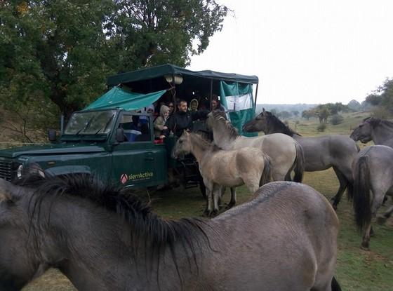 imagen_paleolitico_burgos_uros_caballos_fuego_safari_atapuerca_excursion