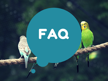 FAQ - Buying Twitter Followers