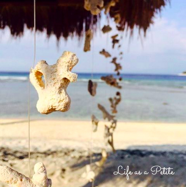Coral Shell Curtain, Gili T