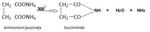 Succinic acid reaction with ammonia.
