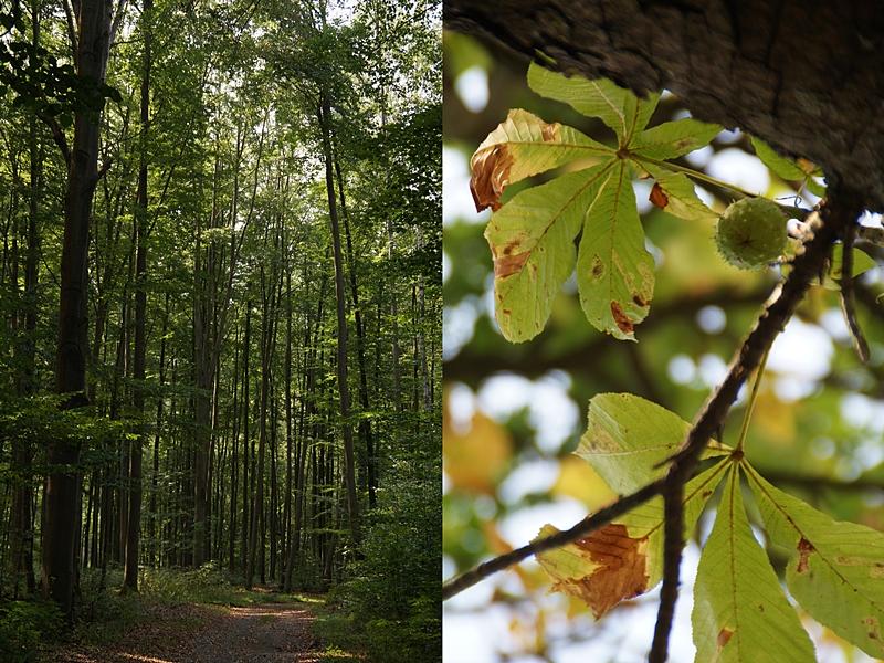 Herbst im Wald // Autumn Forest