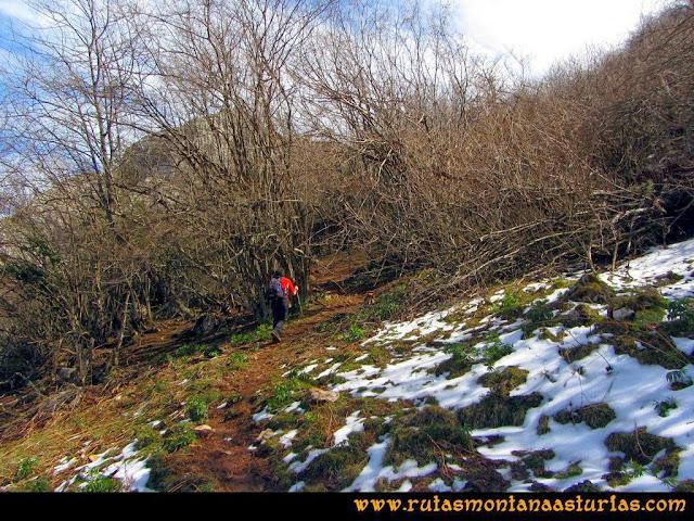 Ruta al Pico Gorrión: Bosque bajo Collada Ordiales