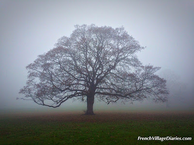 Foggy winter days French Village Diaries au revoir 2016