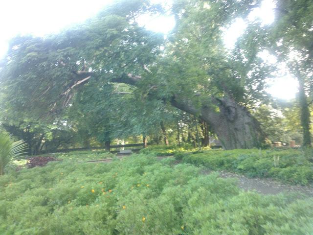 Pune, Baobab