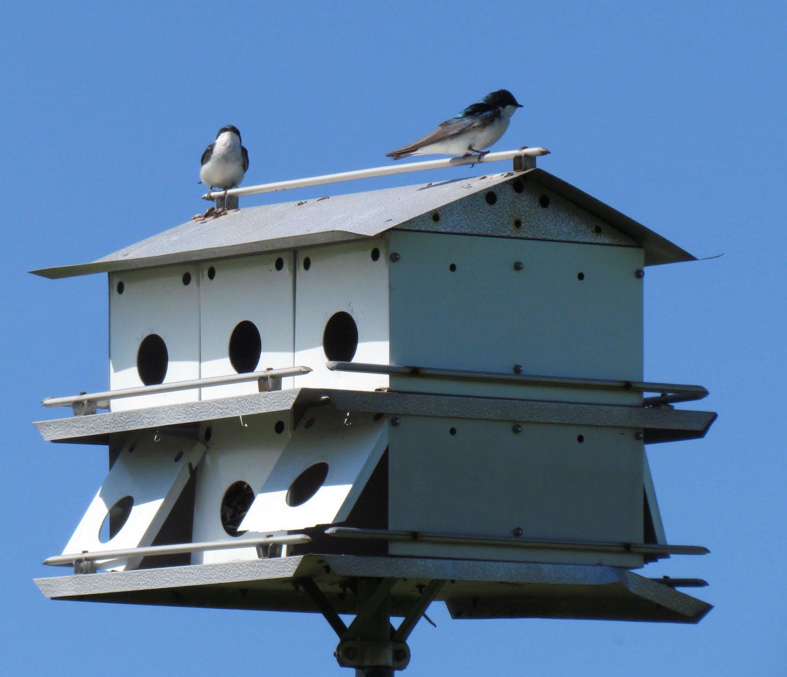 Tree Swallow Bird Houses 31