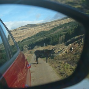 écosse highlands île mull route vache