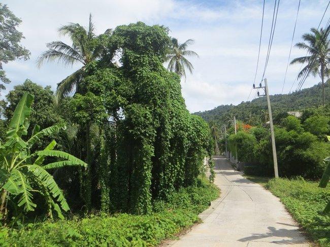 Густое зеленое дерево