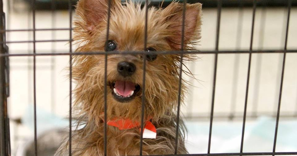Dogs For Adoption Bangor Maine