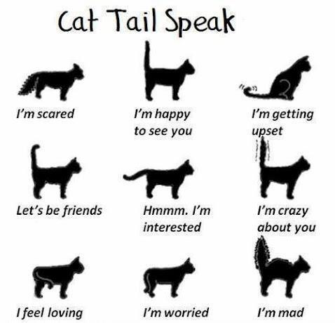 Kuvahaun tulos haulle kuinka puhua kissaa