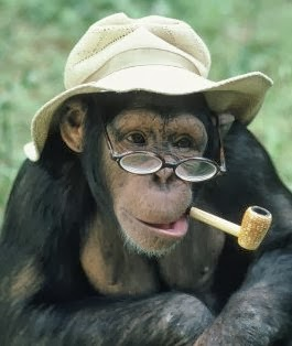 Funny+Monkey+With+Glasses_7.jpg