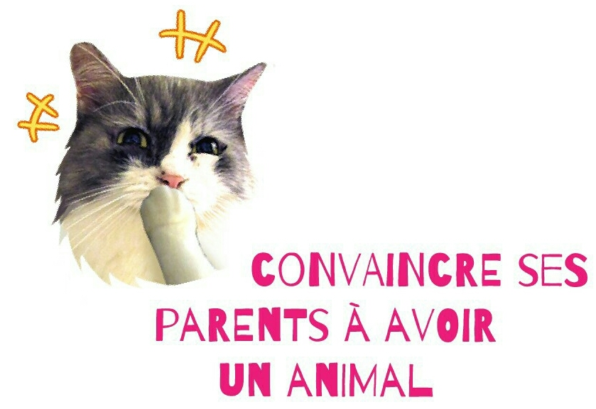 June Paper Convaincre Ses Parents Davoir Un Animal