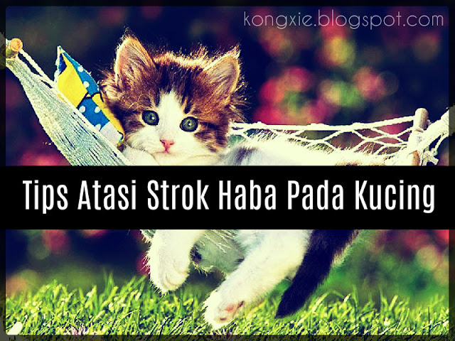 http://kongxie.blogspot.com/2016/03/tips-atasi-strok-haba-pada-si-meow.html