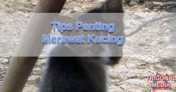 Tips Penting Merawat Kucing