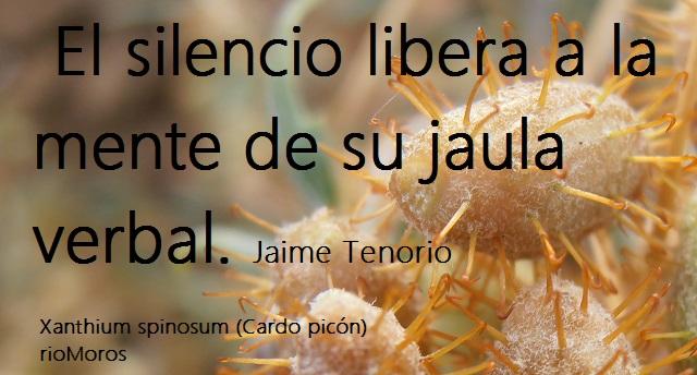 El silencio libera a la mente de su jaula verbal Jaime tenorio