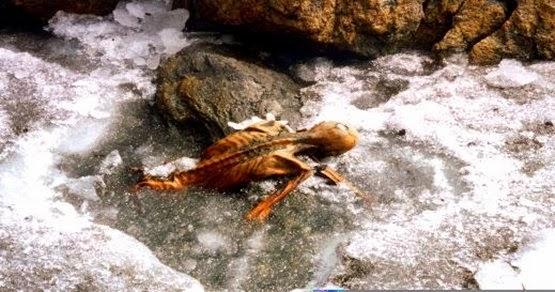 laparum kenőcsék csontokhoz és ízületekhez
