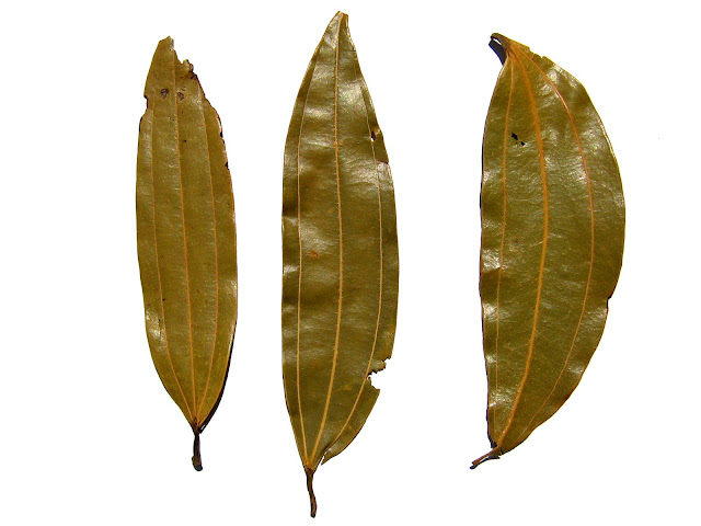 17 Best Benefits Of Bay Leaf (Tej Patta) For Skin, Hair And Health