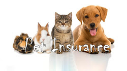 Do We Really Need Pet Insurance?