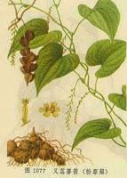 Bagian yang digunakan, rimpang tumbuhan yang telah dikeringkan. Dosis 3-15 gram, standar 6 gram. Di masak selama 20 menit.