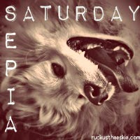 Ruckus the American Eskimo Dog Blog, Sepia Saturday Blog Hop Links