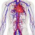 Tingkatan 3 (Bab 2) Peredaran Darah Dan Pengangkutan