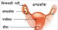 क्या आपके किसी अपने का गर्भाशय (Uterus) का ऑपरेशन होनेवाला है?