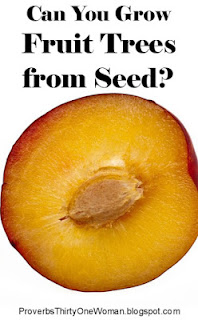 https://proverbsthirtyonewoman.blogspot.com/2018/05/can-you-grow-fruit-trees-from-seed.html