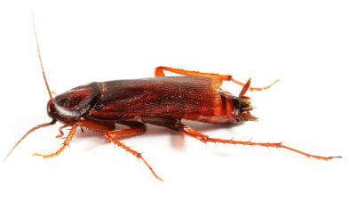 شركة مكافحة الحشرات بالخبر