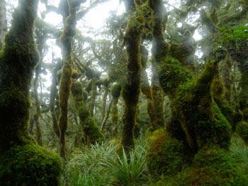 Gambar Hutan Terindah di Dunia 6