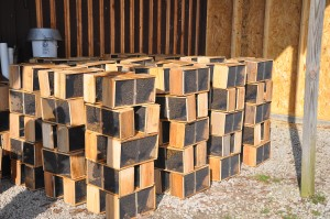 A Tale of Two Hives: Following the progress of two new hives created from package bees