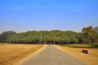 दुनियां का सबसे Wide Tree-चौड़ा पेड़ देखा है