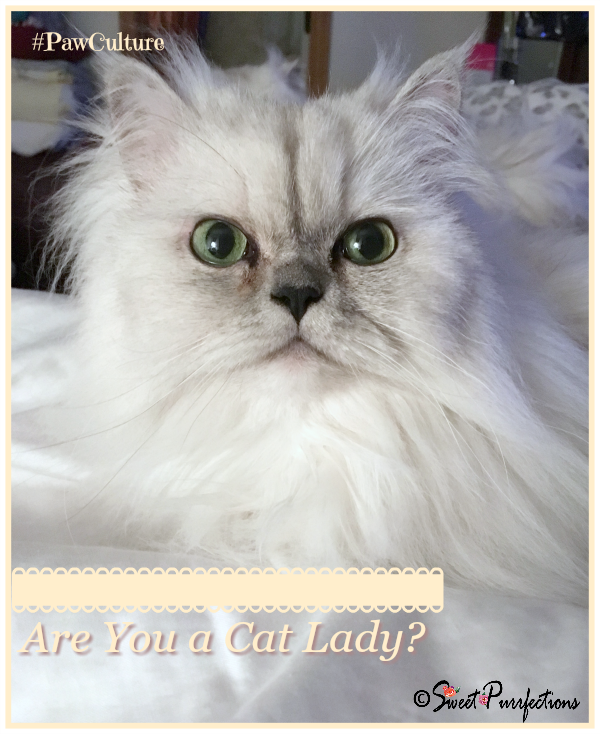 Truffle asks if you are a Cat Lady