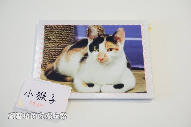 13047974 1099288283457749 6909613331373489892 o - 熱血採訪|朵貓貓咖啡館 - 貓咪餐廳