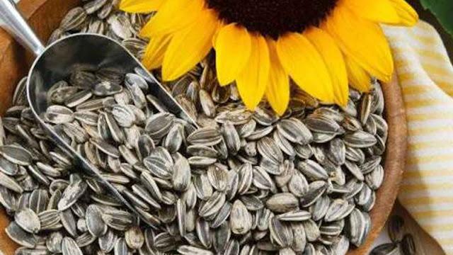 biji bunga matahari imlek