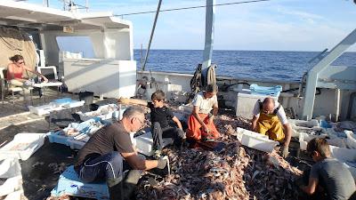 Pescaturismomallorca Ayudando a seleccionar los peces