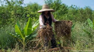 biodiversity farming in Thailand