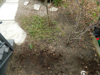 Parkdale Toronto front garden spring cleanup after by Paul Jung Gardening Services