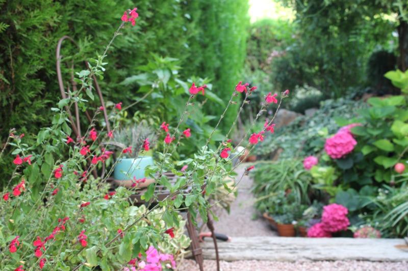 Salvia, alegrías, hortensias