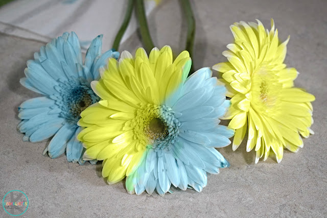 coloring-flower-science-project-for-kids