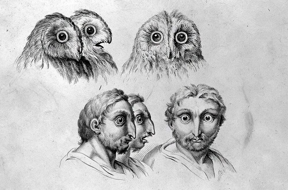 13-Owl-Animal-Transformations-Drawings-from-the-1600s-www-designstack-co