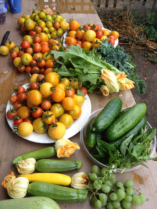 garden food. Here\u0027s Some Information That\u0027s Directly Relevant To The West Brunswick Community Garden \u0026 Food Forest: